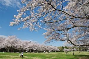 千葉市泉自然公園